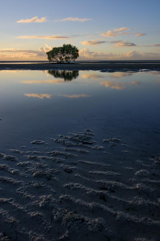 Mangrove Dawn Vertical